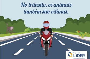 quinze-animais-morrem-por-segundo-atropelados-em-estradas-brasileiras