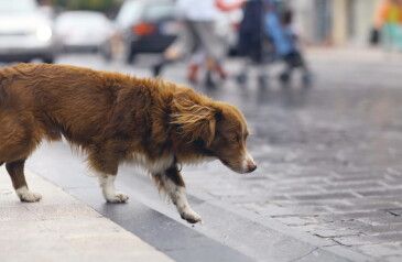 cachorro-na-rua-min